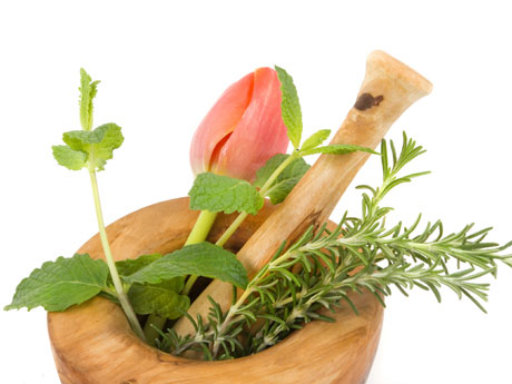 usan con fines terapéuticos. Tanto la decocción de las hojas como el ...