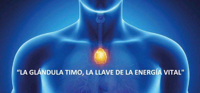 La función de la glándula del timo. – Reiki a domicilio